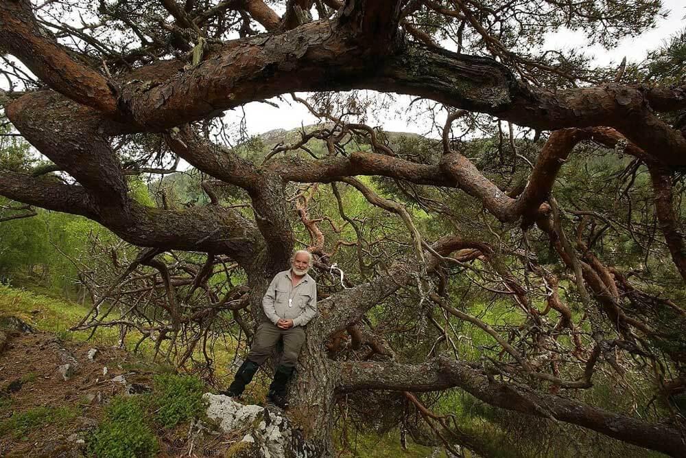 Alan Watts Featherstone apie natūralius miškus, gamtosaugą, aktyvizmą ir viltį