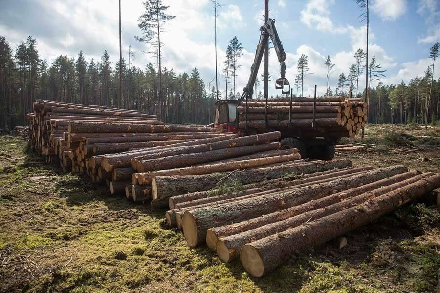 Miško festivalyje bus aiškinamasi, ar politikai pasuks Žaliuoju kursu, ar didins miškų kirtimą